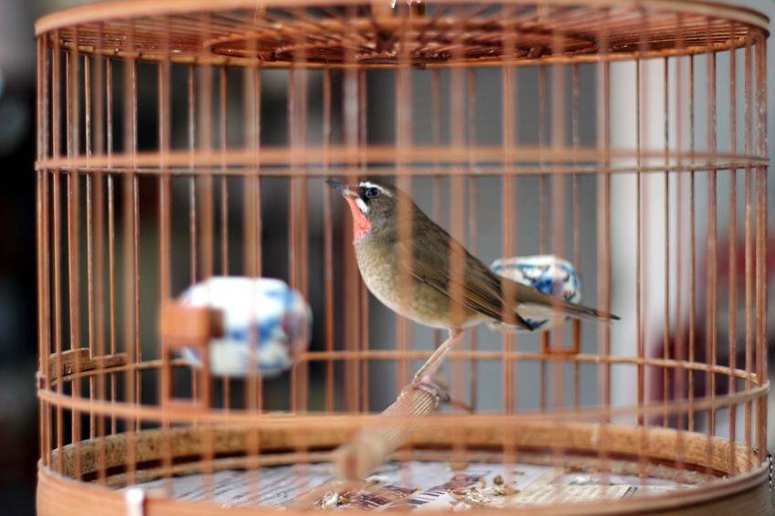 28481876 - bird in the wooden cage, taken in hong kong bird market
